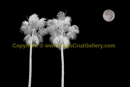 """Moon Gazers"" ● Infrared Photography"