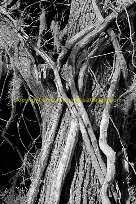 """Nexus"" ● Infrared Photography"