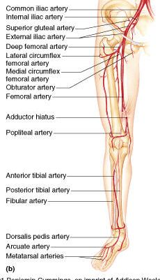 Harmonizing energetic blocks in the arms and legs is of particular importance. Peripheral blood flow may be the first sign of loss of circulation