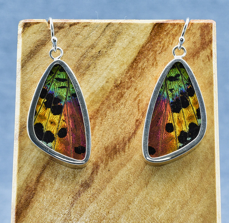 Medium Madagascan Sunset Moth Sterling Bezel Earrings