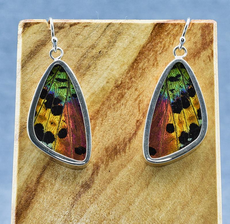 Medium Madagascan Sunset Moth Sterling Bezel Earrings