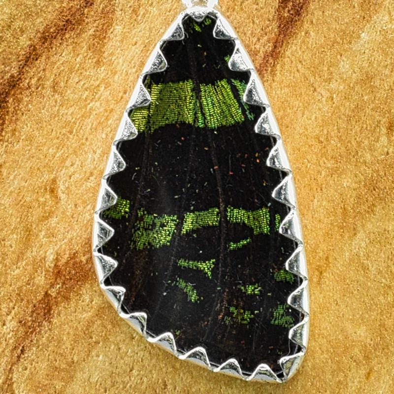 X-Small Madagascan Sunset Moth Sterling Bezel Earrings