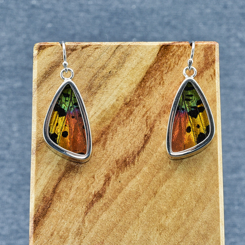 Small Madagascan Sunset Moth Sterling Bezel Earrings