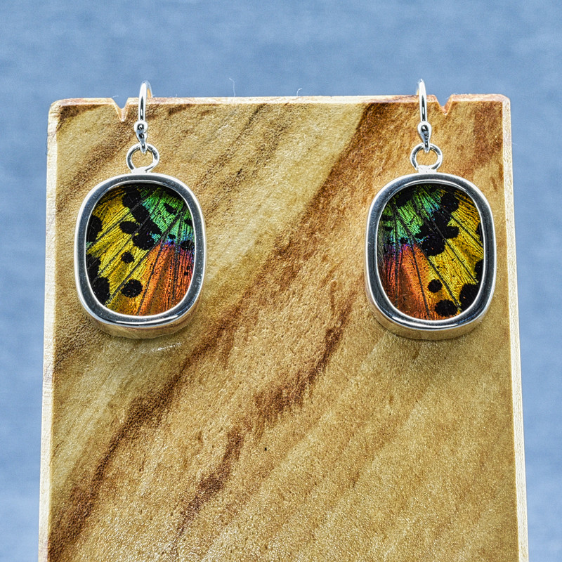 Small Oval Madagascan Sunset Moth Sterling Bezel Earrings