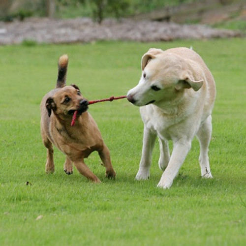Suite Dog Daze - PET BOARDING