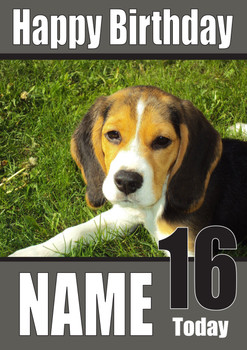 Beagle Puppy Dogs And Puppies Happy Birthday Kirsten