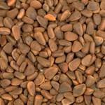 Jumbo Cedar Nuts - 100g