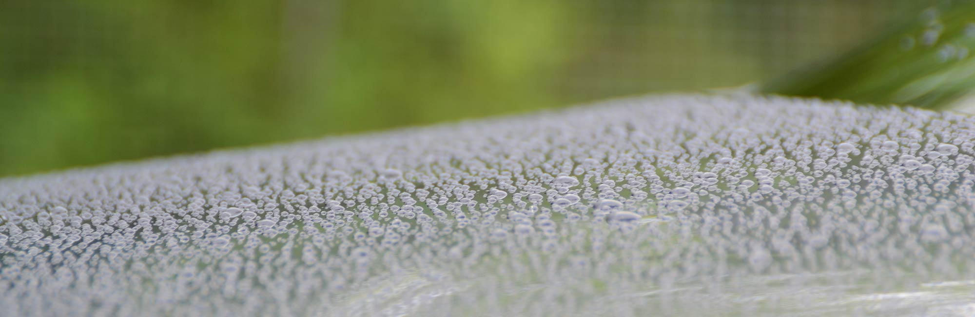 Hydrocoat - A layer of super hydrophobic protection