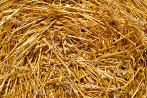 Barley Straw Single Biscuit