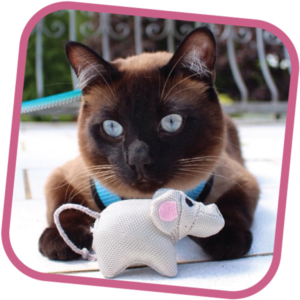 Beco Family for Cats Eco-Friendly Cat Toy