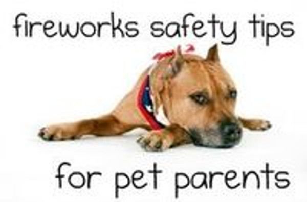 Fireworks & Your Pets