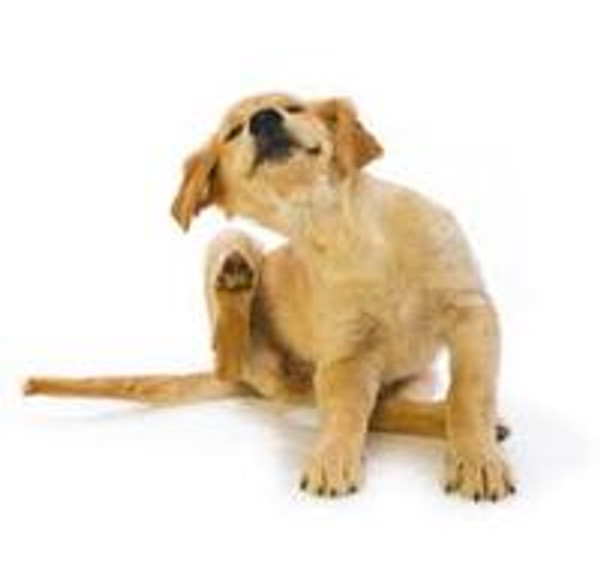 Its time to make sure your pets are up to date with their Flea Treatment!!