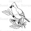 Titmouse Digital Stamp