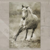 Rustic Galloping Dappled Grey Horse Gallery Wrap Canvas Art