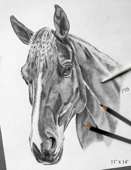 Custom Graphite Horse Head Study