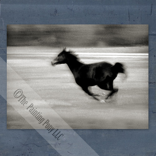 Black and White Galloping Horse Fine Art Gallery Wrap Canvas