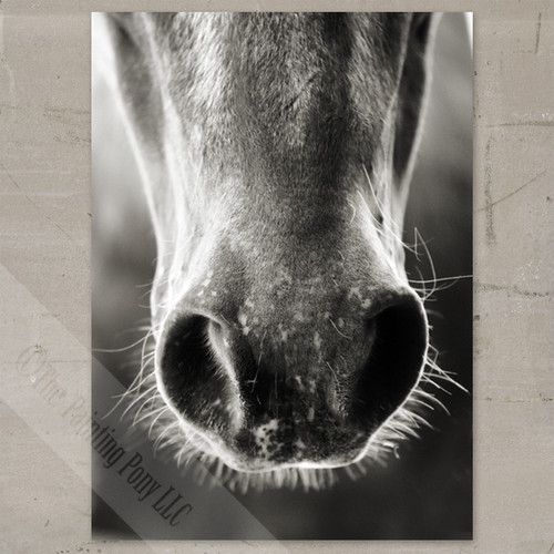 Horse Whiskers Fine Art Gallery Wrap Canvas Print