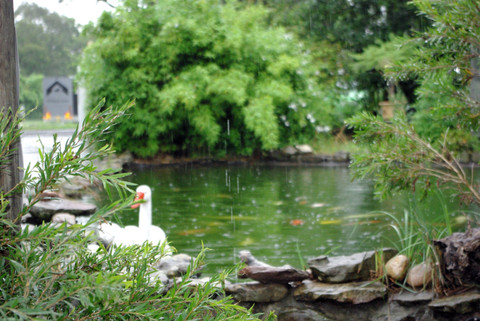 Blog for Fish pond preparation