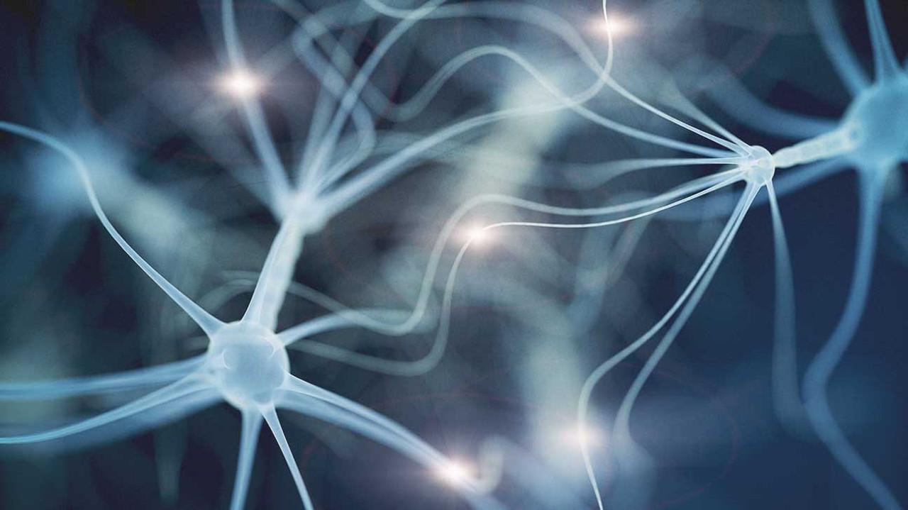 Brain Optimization Throughout The Lifespan