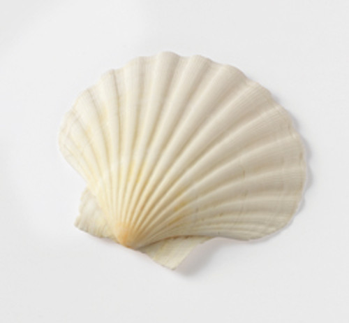 HIC Natural Baking Shell, 3.5in, Set 6