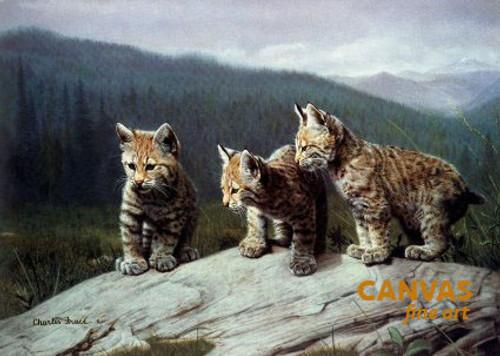 Charles Frace 'Three of a Kind' Leopard Cubs 9x12 Art Print O/E