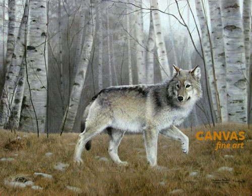 Charles Frace 'Watchful' Gray Wolf Canvas Artist Proof L/E
