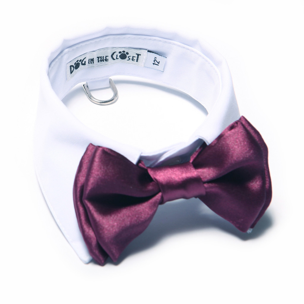 White Shirt Dog Collar with Purple Bow Tie