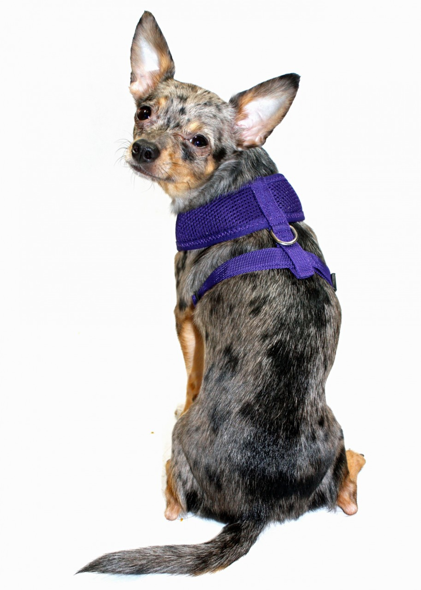 comfort dog hip model ultra harness purple free shipping comforter vest mesh zoom doggie hd