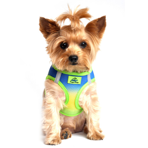 American River Dog Harness Ombre Collection - Colbalt Sport