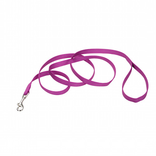 Copy of Coastal Pet Nylon Leash - Orchid