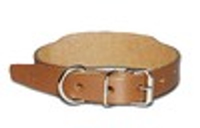"17"" Beagle Collar with Roller Buckle and Space For Name tag"