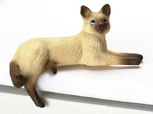 Siamese Cat Sitting on Edge