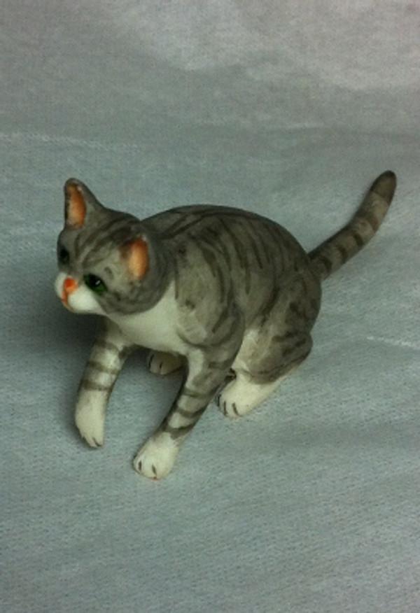Playful Grey Cat