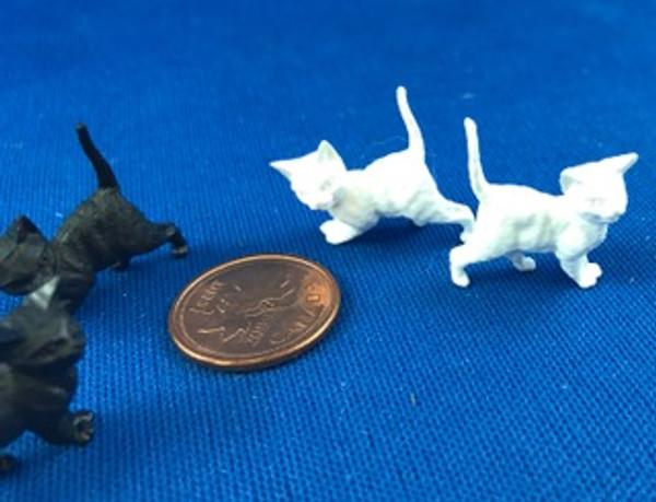 Pair of Kittens - Black or White