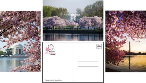 Festival Postcards (set of 12)