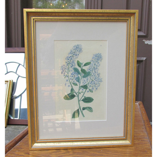 A16050 - Antique Block Printed Hand Painted Botanical Study in Frame