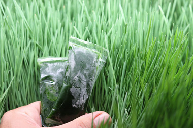 Our Juice is Darker green than the grass!