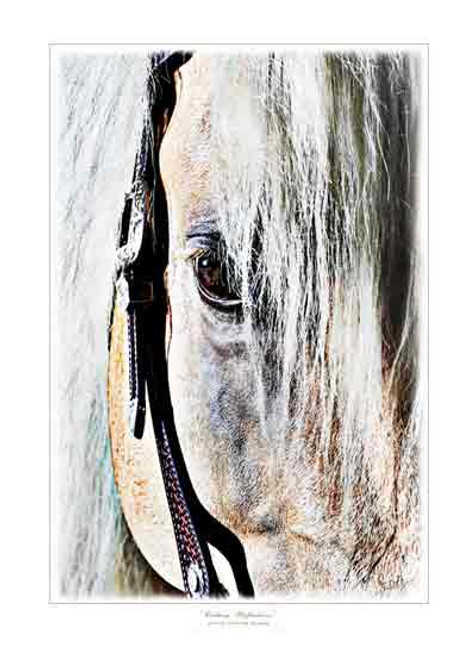 """""""Cutting Reflections"""" Greeting Cards By Vickie Close"""