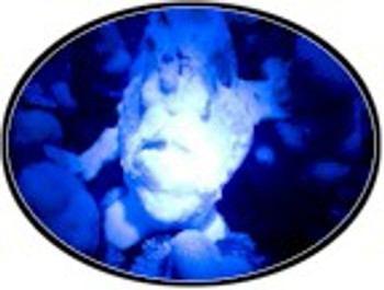 The UV light from the B14LED can be used to make rock fluoresce.