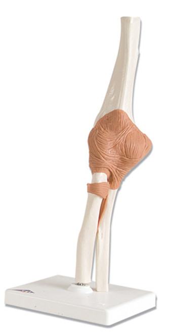 Functional Elbow Joint