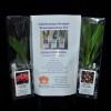 Celebration Orchid Transplanting Kit (Catt)