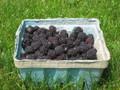 Blackcap Raspberry