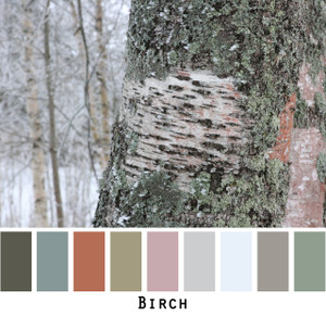 Birch - sage black steel blue grey dusty mauve tones of birch bark colors for blue eyes, green eyes, brown eyes, blonde hair, brunette, redhead, black hair, gray hair - photo by Inese Iris Liepina, Wrapture by Inese