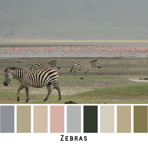 zebras - grey sage gray black white ivory tan dusty green olive lichen pink flamingo colors for blue eyes, green eyes, brown eyes, blonde hair, brunette, redhead, black hair, gray hair - photo by Inese Iris Liepina, Wrapture by Inese