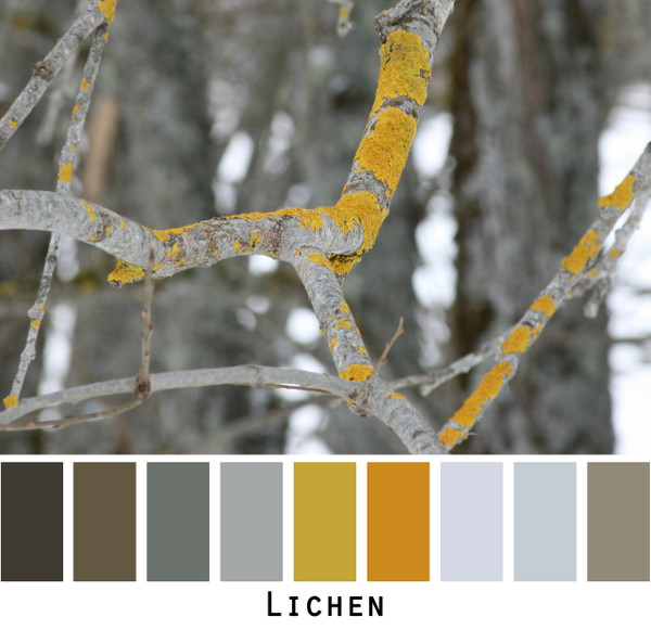 Lichen - bright chartreuse green gold lichen on a grey tree branch colors for green eyes, brown eyes,  brunette, redhead, black hair, gray hair - photo by Inese Iris Liepina, Wrapture by Inese