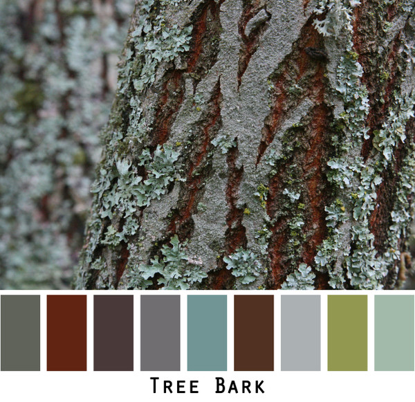Tree Bark - steely blues and grey with green and red brown chocolate brown colors for blue eyes, green eyes, brown eyes, brunette, redhead, black hair, gray hair - photo by Inese Iris Liepina, Wrapture by Inese