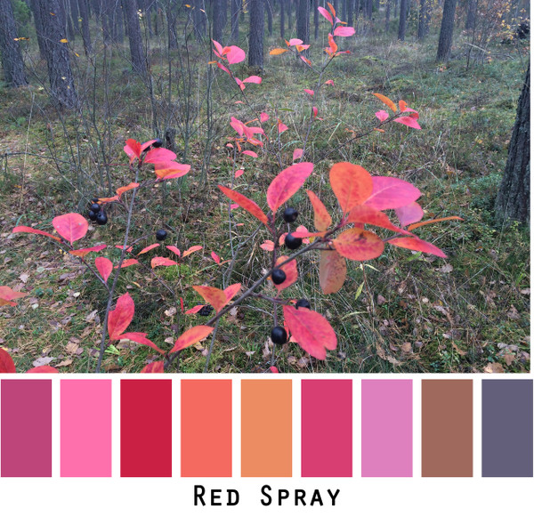 Red Spray - red fuchsia tangerine orange pink purple brown for green eyes, brown eyes, brunette, black hair, gray hair photo by Inese Iris Liepina, Wrapture by Inese