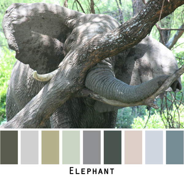 Elephant - blue grey sage gray ivory teal for blue eyes, green eyes, brown eyes, blonde hair, brunette, redhead, black hair, gray hair - photo by Inese Iris Liepina, Wrapture by Inese