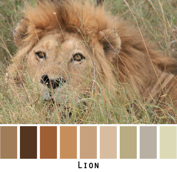 Lion - brown gold tan beige  taupe lichen for blue eyes, green eyes, brown eyes, blonde hair, brunette - photo by Inese Iris Liepina, Wrapture by Inese