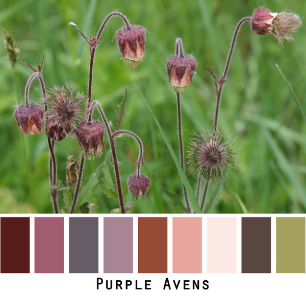 purple avens - violet purple maroon dusty lavender dusty rose peach pale coral gold sage green flowers bitene  colors for blue eyes, green eyes, brown eyes, blonde hair, brunette, redhead, black hair, gray hair - photo by Inese Iris Liepina, Wrapture by Inese